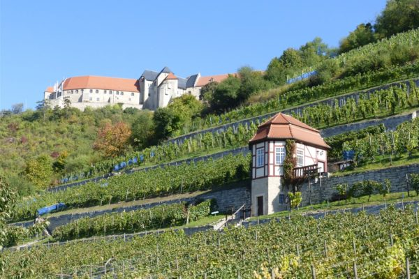 Freyburg an der Unstrut: Schloss Neuenburg mit Weinberg